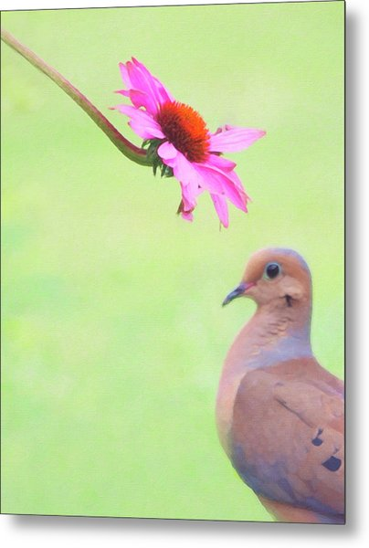 Metal Print featuring the photograph Mourning Dove by Sue Collura