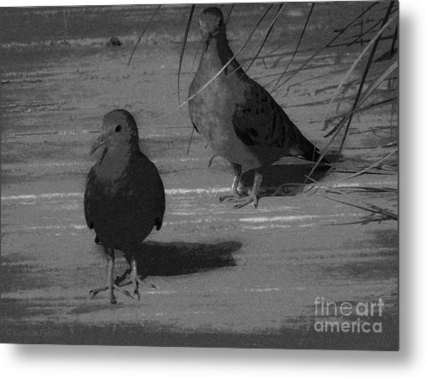 Mr And Mrs Dove Metal Print