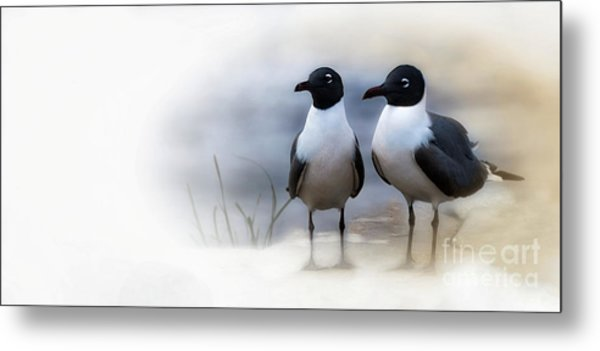 Mr And Mrs Laughing Gull Metal Print