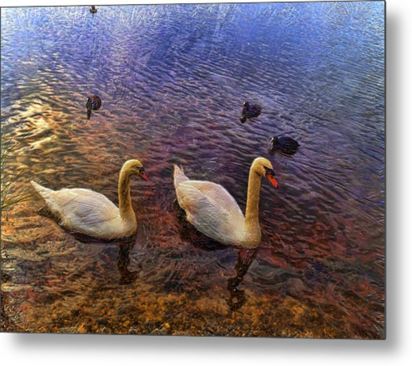 Mr And Mrs Swan Go Viisiting Metal Print