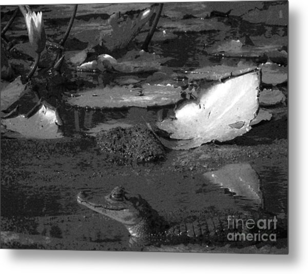 Mr. Caiman Metal Print