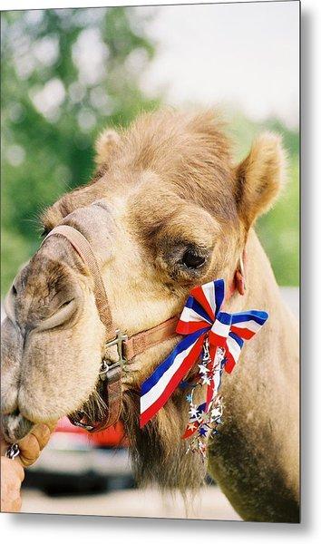 Mr. Camel Metal Print by Cheryl Martin