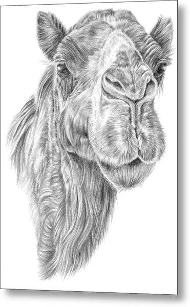 Mr Rak Camel Metal Print