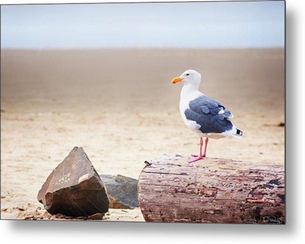 Mr. Seagull Metal Print