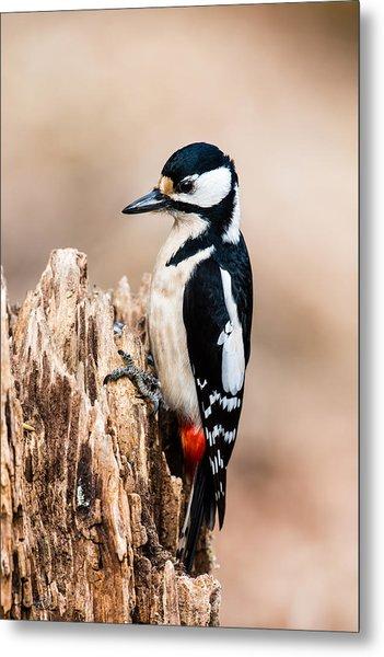 Mrs Woodpecker Metal Print