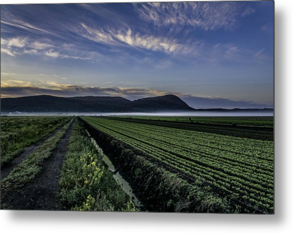 Dawn And Fog Over The Farmland Metal Print
