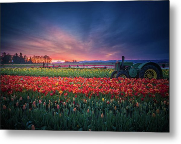 Mt. Hood And Tulip Field At Dawn Metal Print