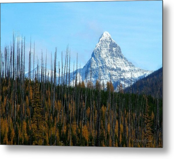 Mt St Nicolas After The Fire Metal Print