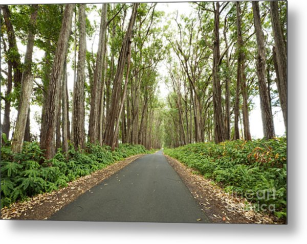 Mud Lane Metal Print