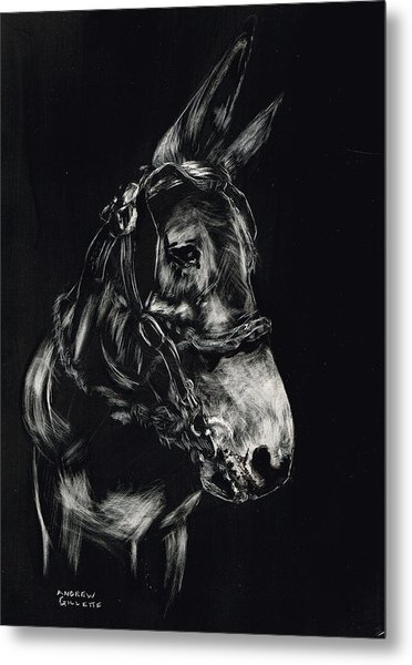 Mule Polly In Black And White Metal Print