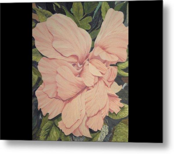 Multipetaled Pink Hibiscus Metal Print