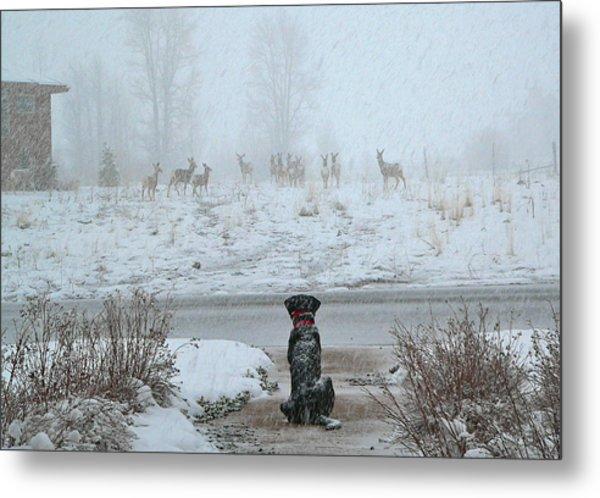 Murphy Watches The Deer Metal Print