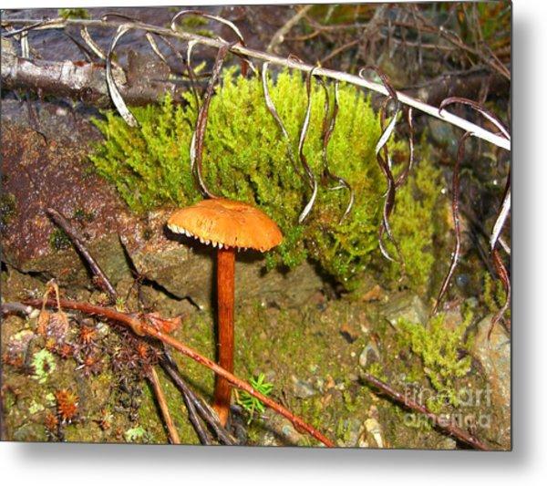 Mushroom Microcosm Metal Print by Jim Thomson