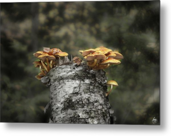 Mushrooms Atop Birch Metal Print