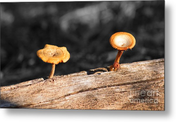 Mushrooms On A Branch Metal Print