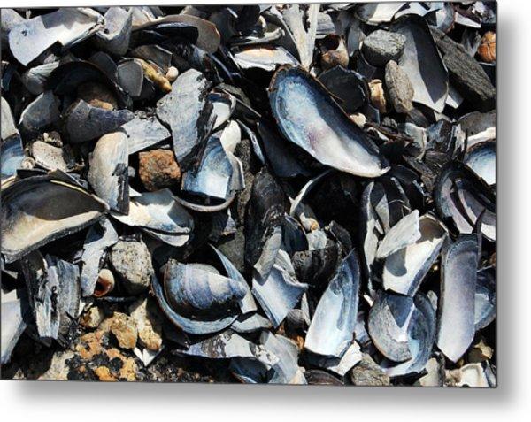 Mussel Shells Metal Print by Rebecca Fulweiler