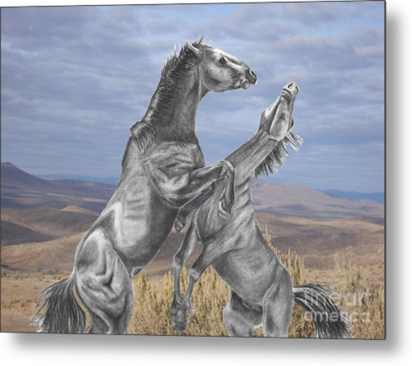 Mustang Battle Metal Print by Russ  Smith