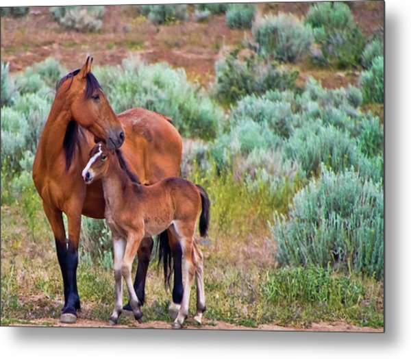 Mustang Horse And Foal Metal Print