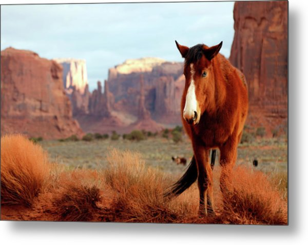 Metal Print featuring the photograph Mustang by Nicholas Blackwell