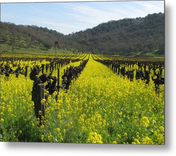 Mustard In The Vineyards Metal Print by Kim Pascu