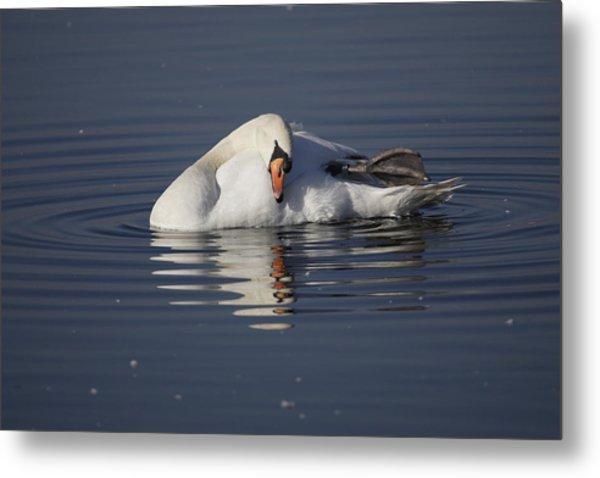 Mute Swan Resting In Rippling Water Metal Print