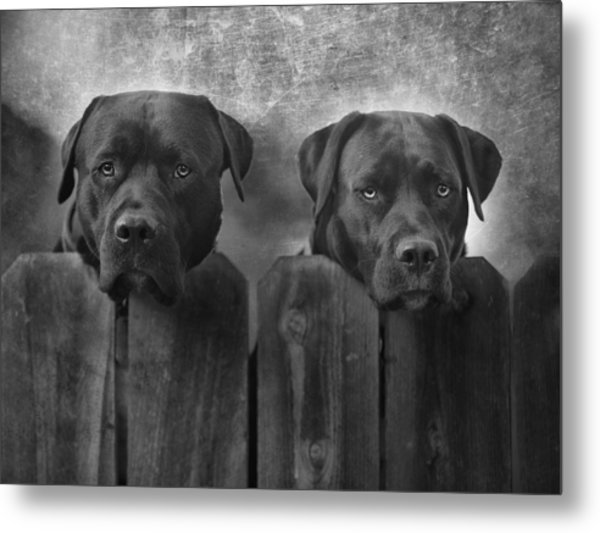 Mutt And Jeff Metal Print