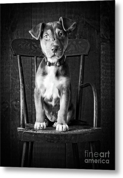 Metal Print featuring the photograph Mutt Black And White by Edward Fielding