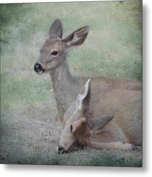 Metal Print featuring the photograph My Brother's Keeper by Sally Banfill
