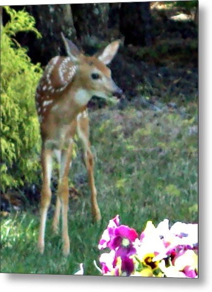 My Deer Friend...... Metal Print