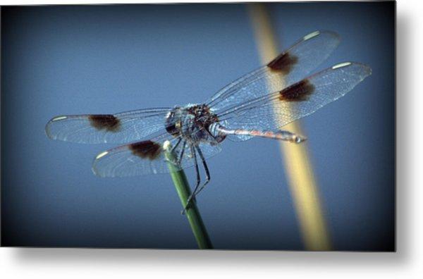 My Favorite Dragonfly Metal Print