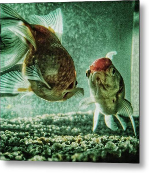 My Fish #fish #aquarium #pets #animals Metal Print