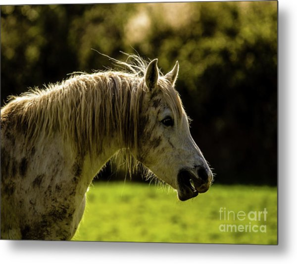 My Friend_4 Metal Print