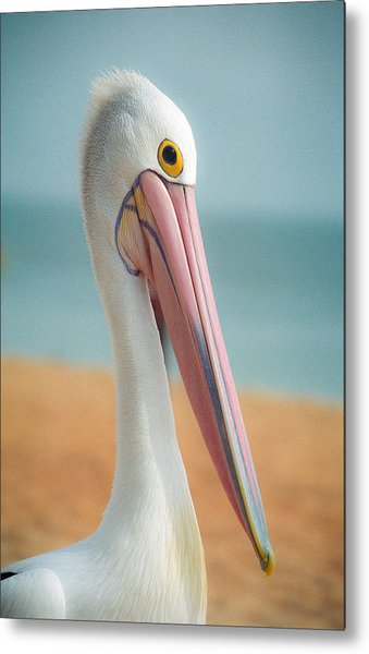 My Gentle And Majestic Pelican Friend Metal Print