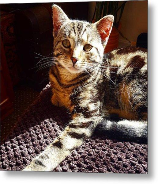My Pretty Kitty #stiles Enjoying The Metal Print by Dante Harker