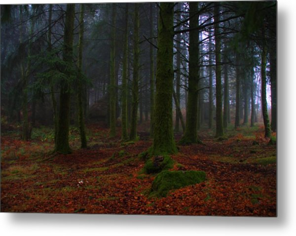 Mystic Forest Metal Print by Paulo Antunes