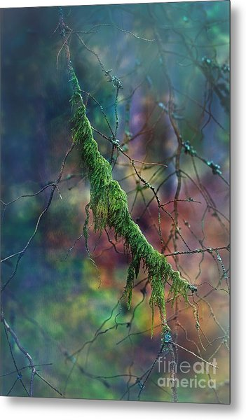 Mystical Moss - Series 1/2 Metal Print