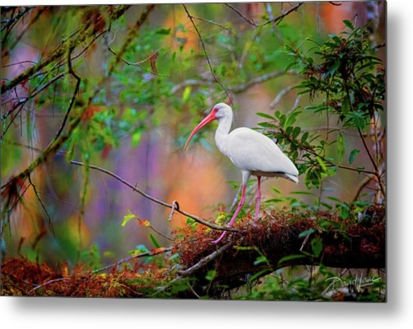 Mystical White Ibis Metal Print
