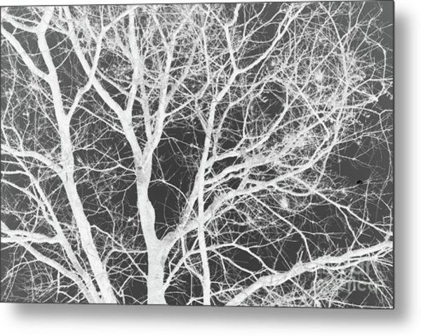 Naked Branch Metal Print
