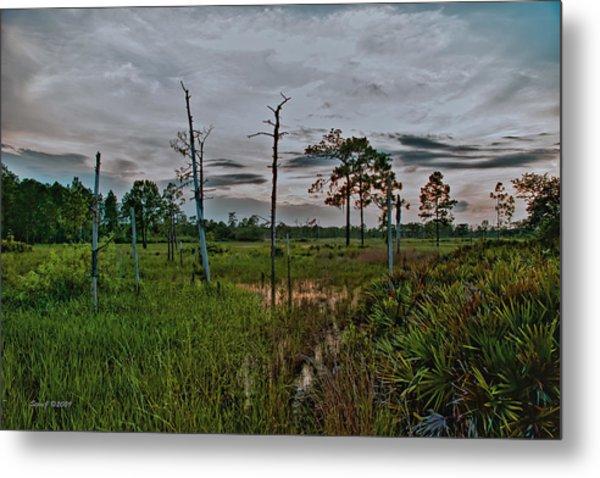 Naked Trees Swamp Metal Print