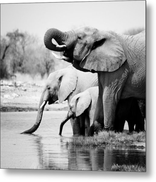 Namibia Elephants Metal Print
