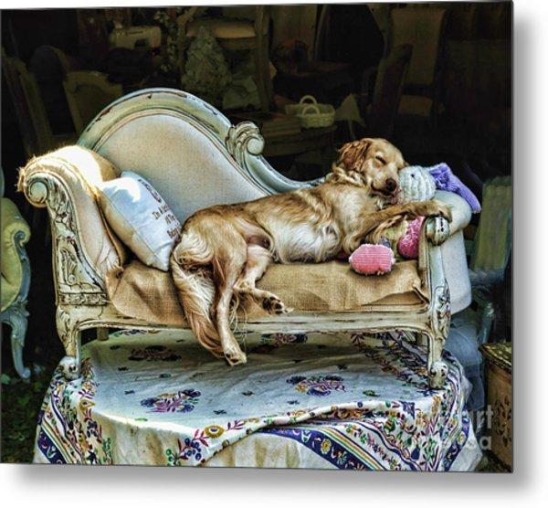 Napping Dog Promo Metal Print