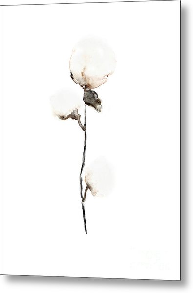 Natural Cotton Fine Art Print Metal Print