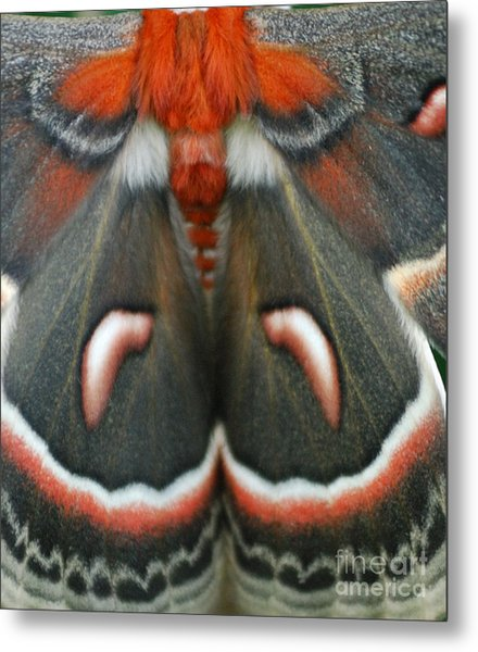 Natural Creation Metal Print