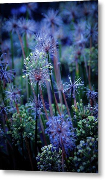 Natural Fireworks 4791 H_2 Metal Print