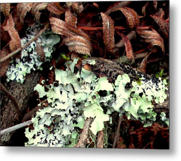 Natural Still Life #1 Metal Print