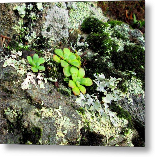 Natural Still Life #3 Metal Print