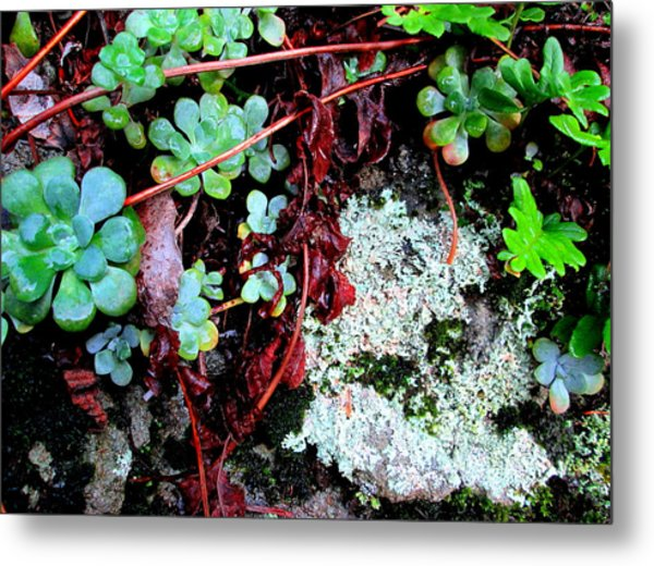 Natural Still Life #5 Metal Print