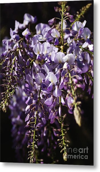 Natural Wisteria Bouquet Metal Print