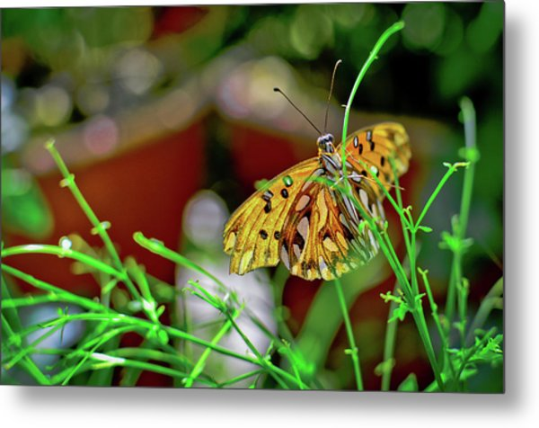 Nature - Butterfly And Plants Metal Print