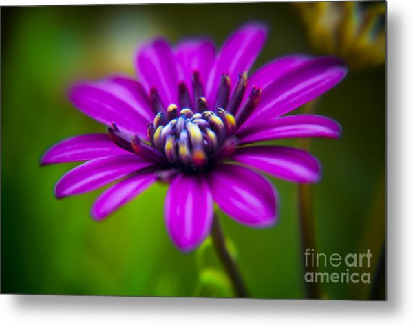 Nature Explosion Metal Print by Alessandro Giorgi Art Photography